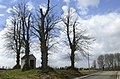 Linden bij de Vijflindenkapel te Zwalm - 372323 - onroerenderfgoed.jpg