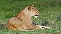 Lion (3075556539).jpg