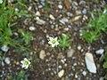 Littleflowers.jpg