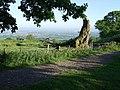 Llwyn Celyn Forestry Walk - geograph.org.uk - 437264.jpg