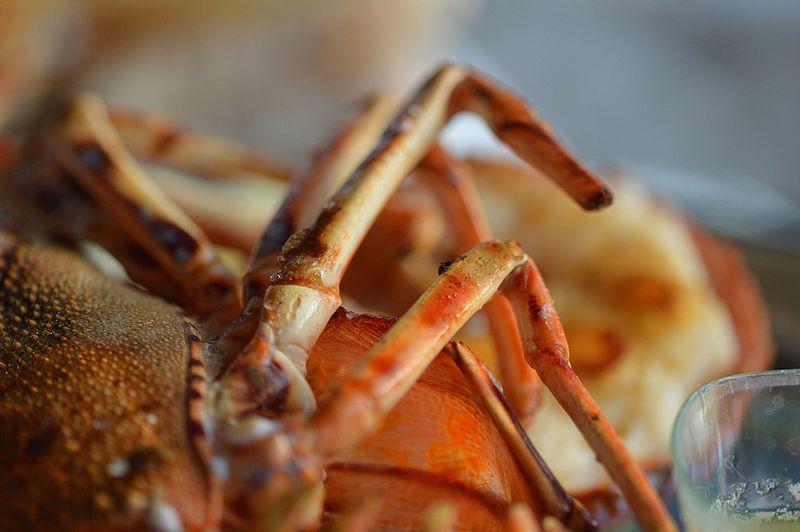 File:Lobster For Lunch 3 (34315205431).jpg