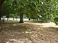 London July 2010 (4827861957).jpg
