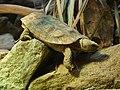 London Zoo 00996.jpg