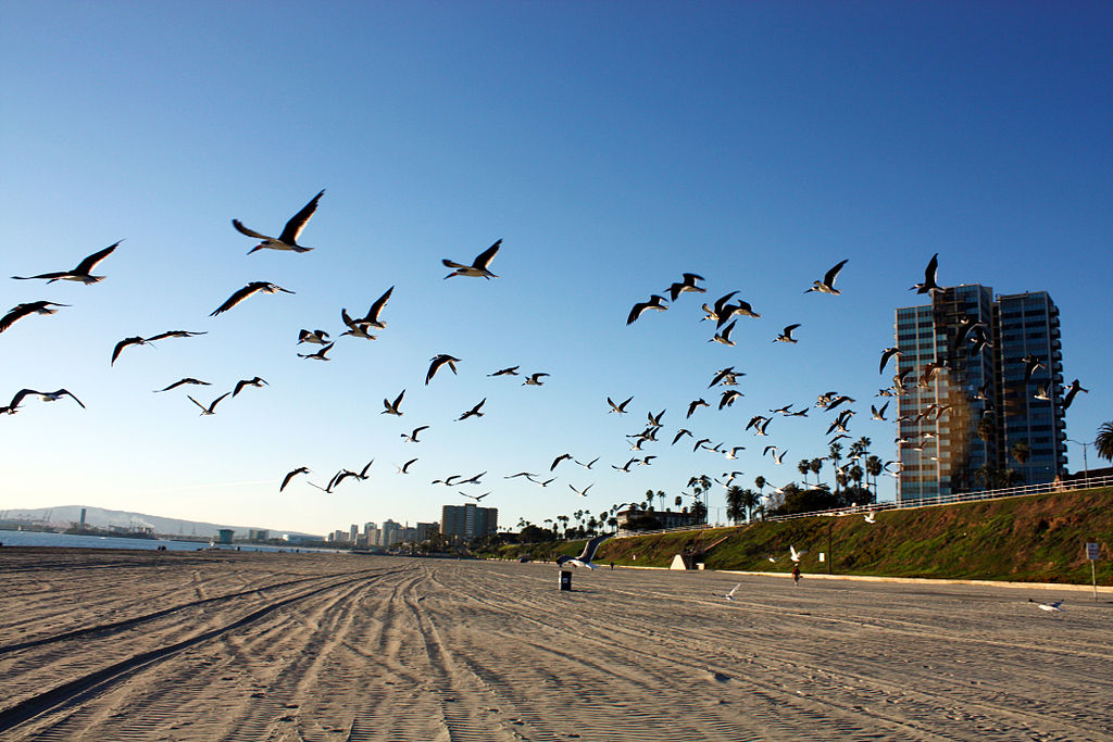Long Beach Ca Current Time