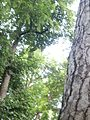 Lorto-botanico-di-padova-2016 27757185784 o 25.jpg