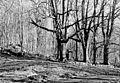 Lučina, Český les, 1998.jpg