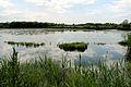 MS-010 Typische Wasserfläche in den Münsteraner Rieselfeldern.jpg