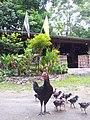 Mae Le, Mae Wong District, Nakhon Sawan 60150, Thailand - panoramio (4).jpg