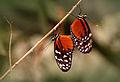 Making Caterpillars (14579395256).jpg