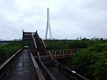 Wooden boardwalk surrounded by mangrove trees leading up to a bird watching hut. In the background you can see the white column of a bridge with wires coming out of either side.