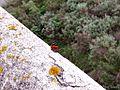 Mariposa sobre un muro - panoramio.jpg