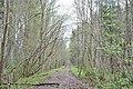 Meža strupceļš - panoramio.jpg