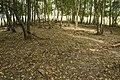 Mežs - panoramio (5).jpg