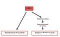Mecanisme d'acció KM1.jpg
