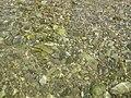 Meljine - panoramio (6).jpg