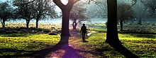 Midwinter sunshine in Bushy Park, Teddington P2120008.JPG