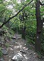 Milešovka - cesta k vrcholu po Z úbočí obr01.jpg