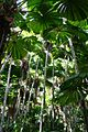 Mission-beach-fan-palm-rainforest-queensland-australia.jpg
