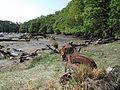 Moëlan-sur-Mer - Cimetière des bâteaux sur l'anse de Lanriot (1).jpg