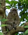 Monkey Sitting on A Tree Branch.jpg