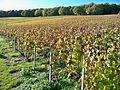 Montgueux vignoble 01.jpg
