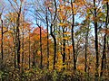 Mount Sterling, North Carolina Fall Foliage 3.JPG