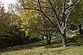 Mount Wilson NSW 2786, Australia - panoramio (34).jpg