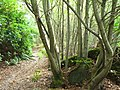 Mountain Wood - geograph.org.uk - 551131.jpg