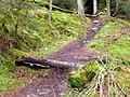 Mountain bike trail - geograph.org.uk - 705479.jpg