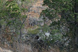 Mount Lewis National Park Protected area in Queensland, Australia