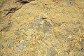 Mudchip breccia in sandstone (Logan Formation, Lower Mississippian; Rt. 35 roadcut, northeast of Rittenours, Ohio, USA) 3 (40044712565).jpg