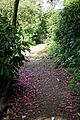 Myddelton House garden, Enfield, London ~ garden path 01.jpg