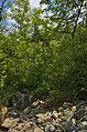 Národní přírodní památka Růžičkův lom, Čelechovice na Hané, okres Prostějov (04).jpg