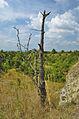 Národní přírodní památka Státní lom, Čelechovice na Hané, okres Prostějov (06).jpg