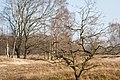 NSG-Boberger-Niederung-29-03-2014-Boberger-Dünenwege 15.jpg