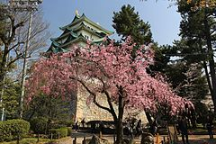 Nagoya Castle Keep Tower and Shidarezakura.JPG