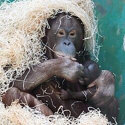 Nanga with male baby.jpg