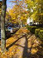 Nassauische Straße im Herbst 20151026 2.jpg