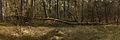 Nationaal Park Drents-Friese Wold. Locatie Dieverzand. Dode boom, belangrijke voedselbron in evenwichtig biotoop 05.jpg