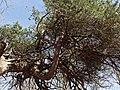 Nationaal Park Kennemerland (40474400375).jpg