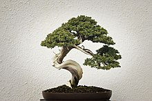 National Bonsai & Penjing Museum (15730143342).jpg