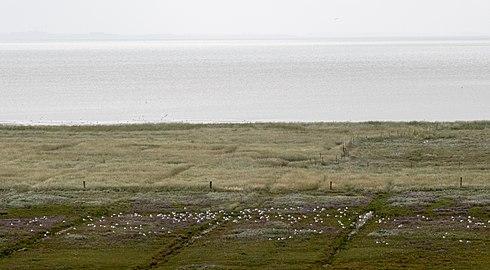 Nationalpark Niedersächsisches Wattenmeer Juist 4.jpg