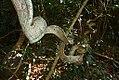 Nature lankawi MAS-1.jpg