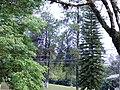 Natureza - panoramio - tiowalmes (1).jpg