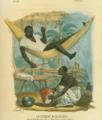 Negre d'Alvarado etendu dans son Hamac, faisant travailler sa femme by Claudio Linati 1828.png