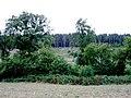 Nether Wood - geograph.org.uk - 208605.jpg