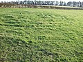 New turf labyrinth - geograph.org.uk - 340951.jpg
