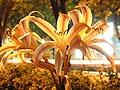 Night flower slow shutter.jpg