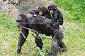 Noichi zoo10 chimpanzee.jpg