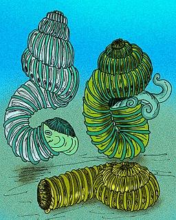 <i>Nostoceras</i> genus of molluscs (fossil)
